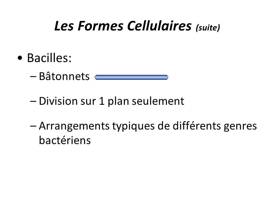 Les Formes Cellulaires (suite)