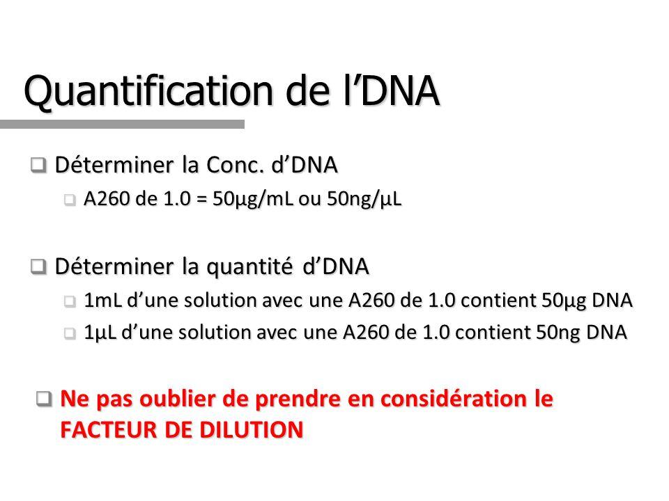 Quantification de l'DNA