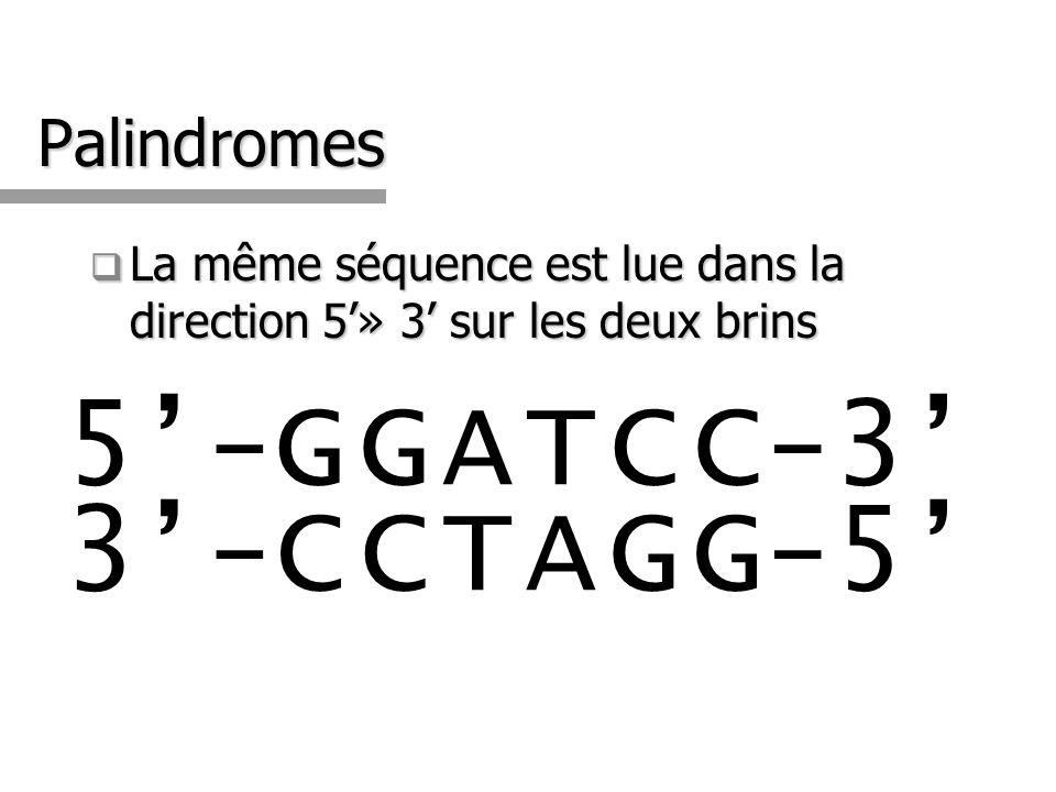 5'-G G A T C C-3' 3'-C C T A G G-5' Palindromes