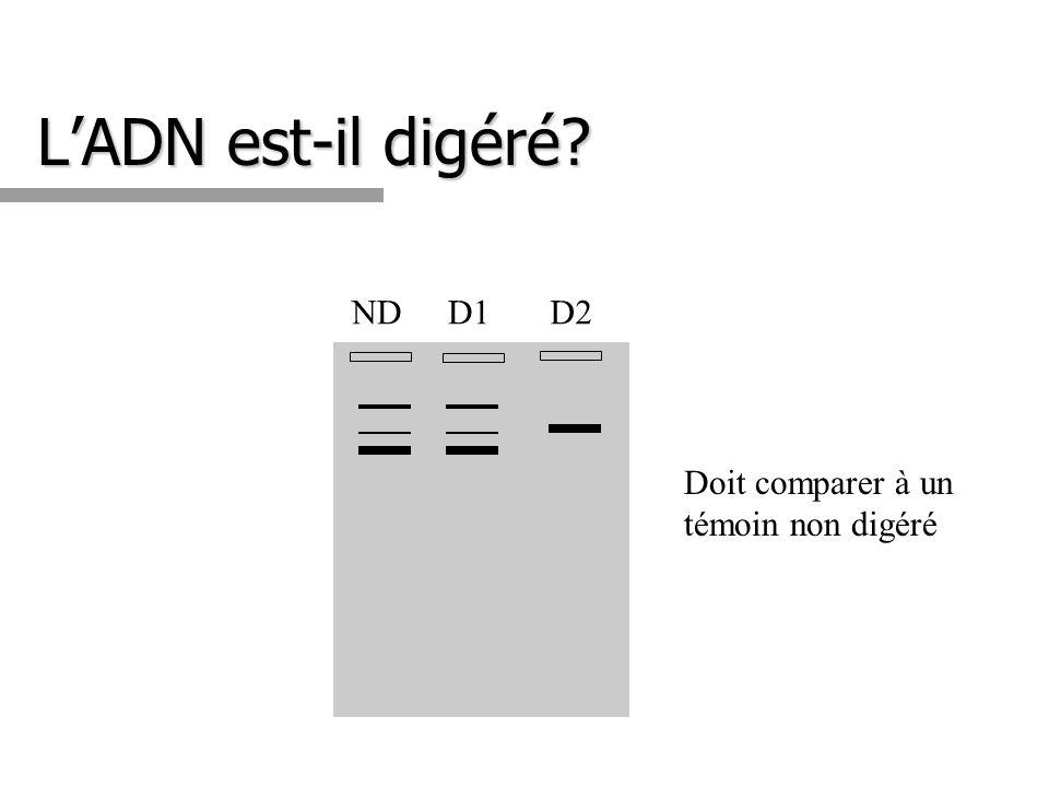 L'ADN est-il digéré ND D1 D2 Doit comparer à un témoin non digéré