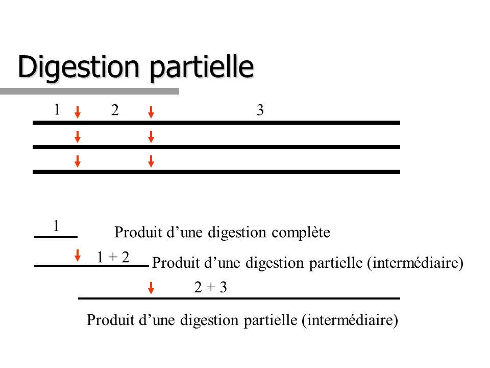 Digestion partielle 1 2 3 1 Produit d'une digestion complète 1 + 2