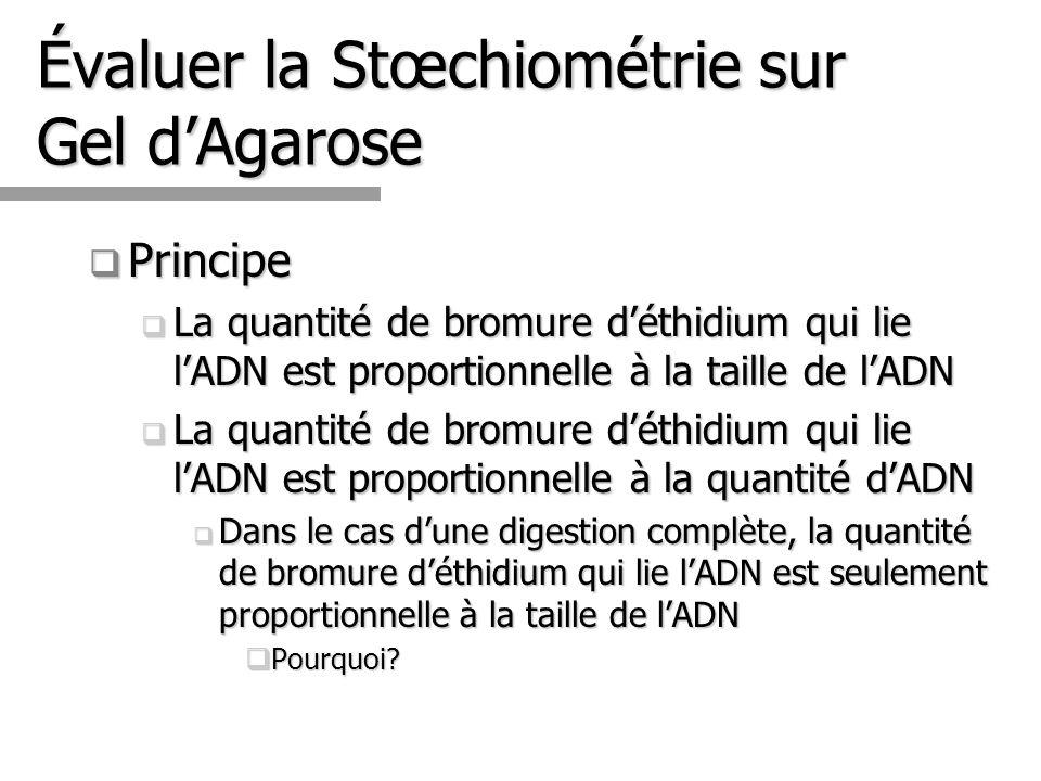 Évaluer la Stœchiométrie sur Gel d'Agarose