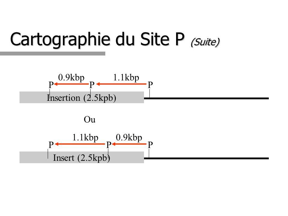 Cartographie du Site P (Suite)