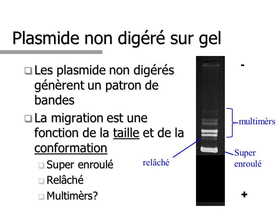 Plasmide non digéré sur gel