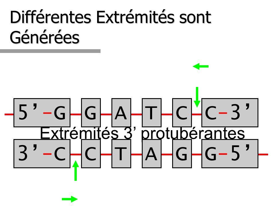 Différentes Extrémités sont Générées