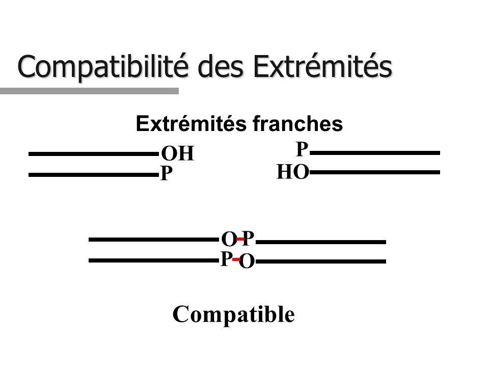 Compatibilité des Extrémités