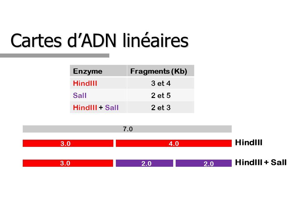 Cartes d'ADN linéaires