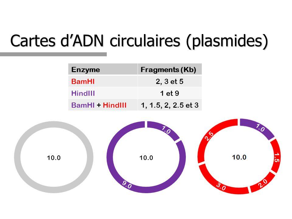 Cartes d'ADN circulaires (plasmides)