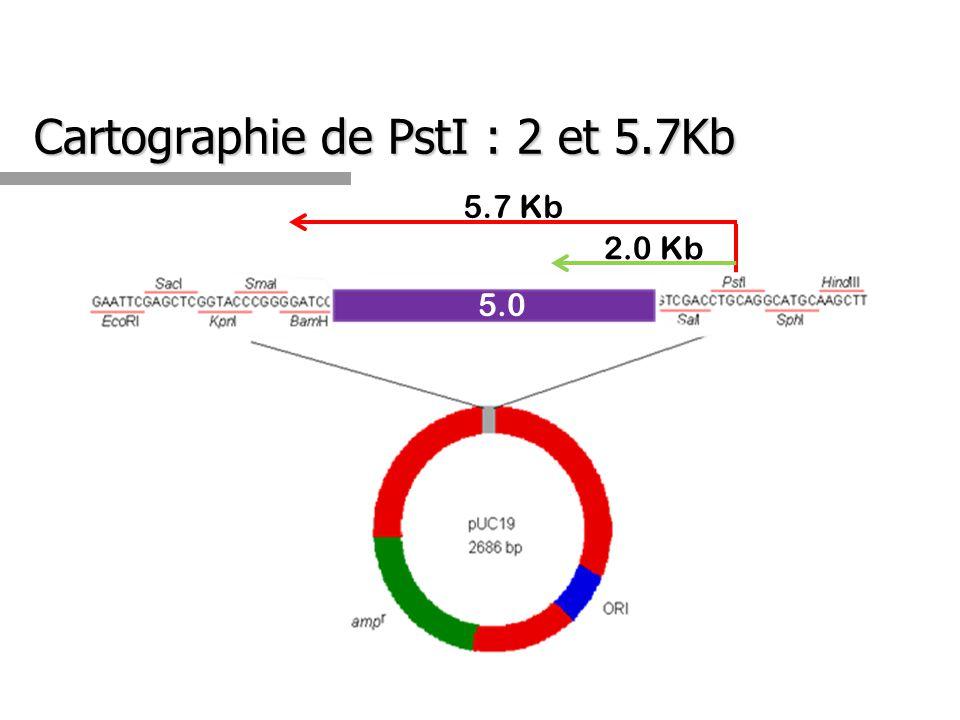 Cartographie de PstI : 2 et 5.7Kb