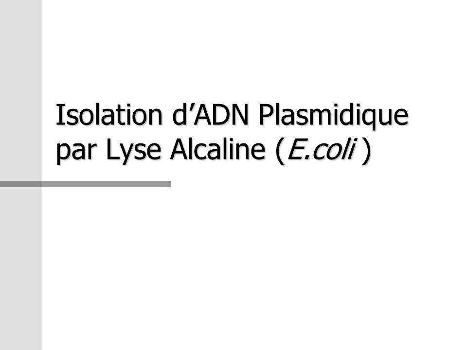 Isolation d'ADN Plasmidique par Lyse Alcaline (E.coli )