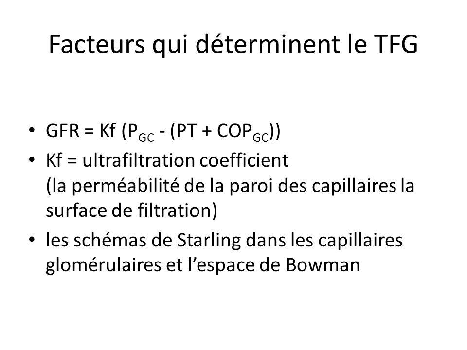 Facteurs qui déterminent le TFG