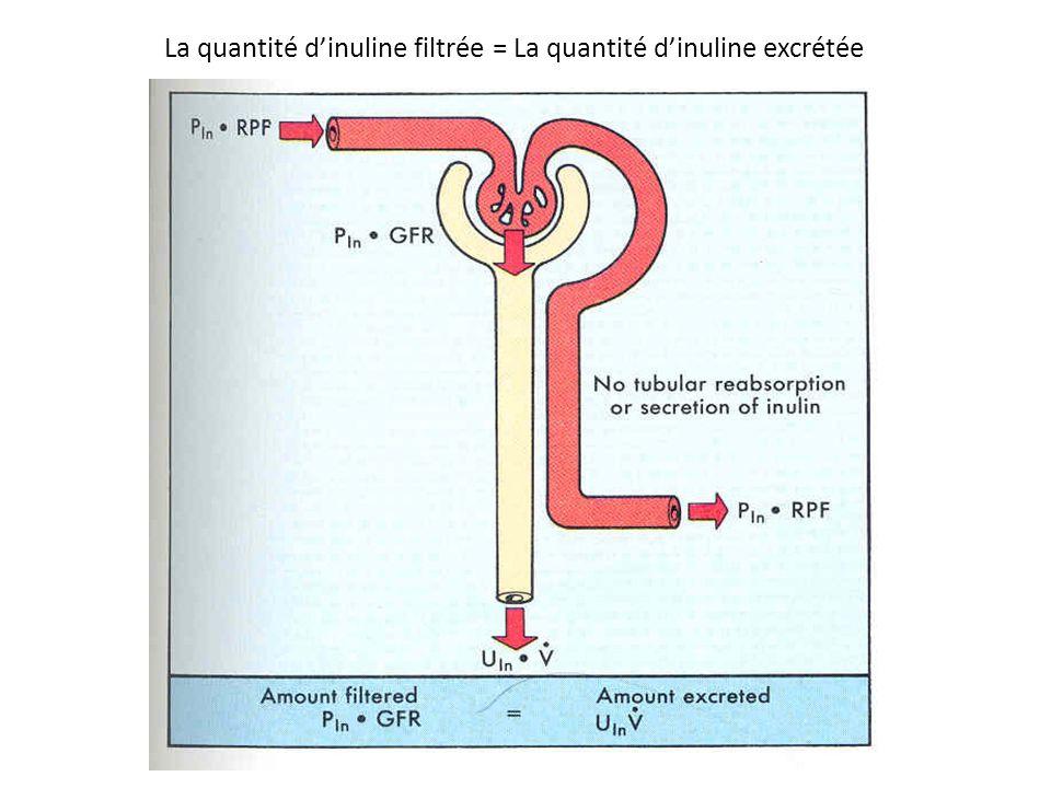 La quantité d'inuline filtrée = La quantité d'inuline excrétée