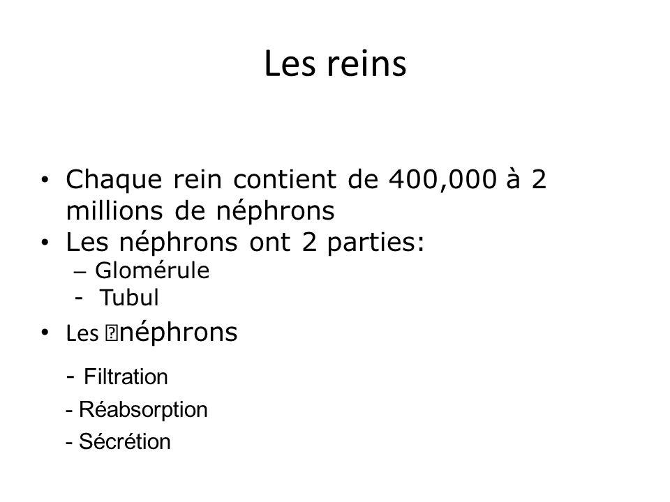 Les reins Chaque rein contient de 400,000 à 2 millions de néphrons. Les néphrons ont 2 parties: Glomérule.