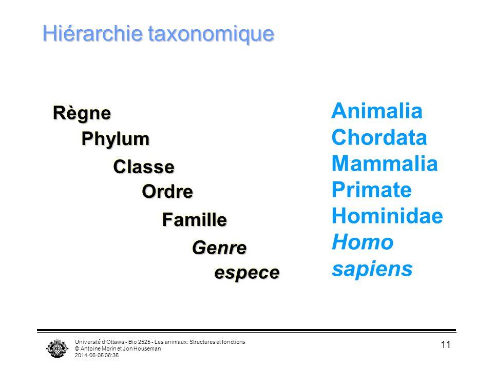 Hiérarchie taxonomique