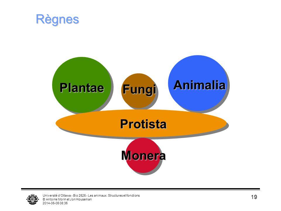Règnes Animalia Plantae Fungi Protista Monera