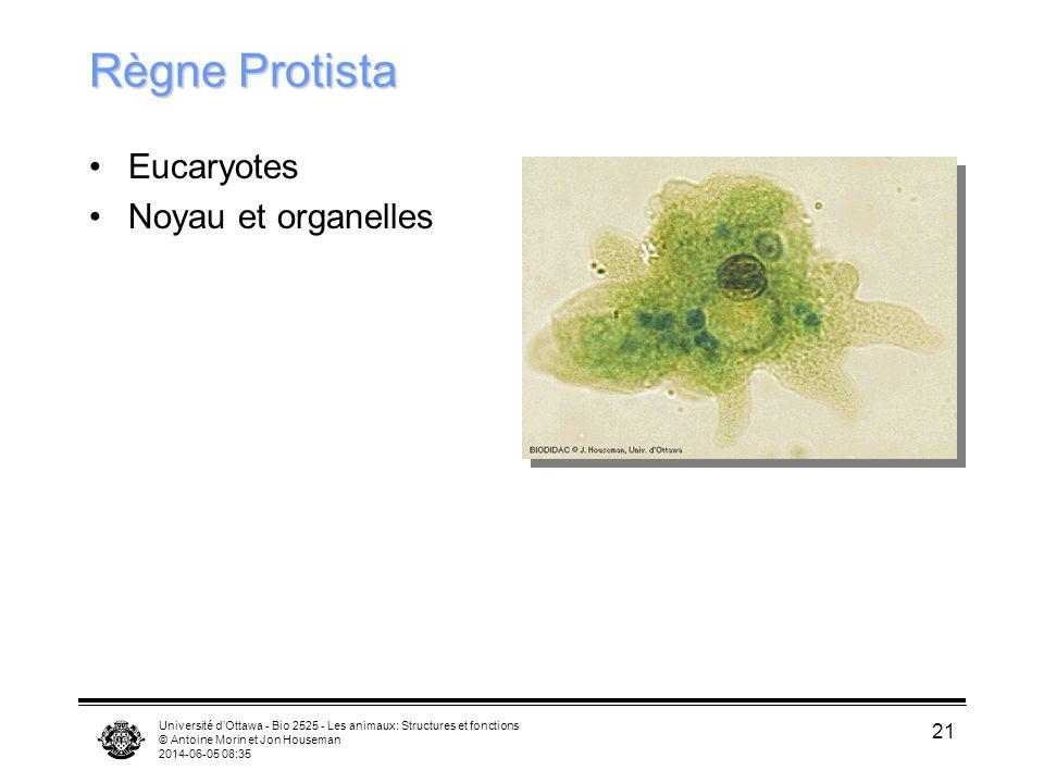 Règne Protista Eucaryotes Noyau et organelles