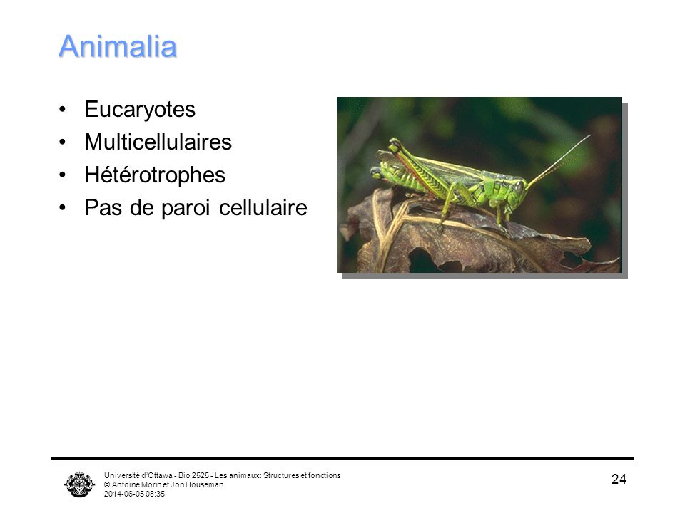 Animalia Eucaryotes Multicellulaires Hétérotrophes
