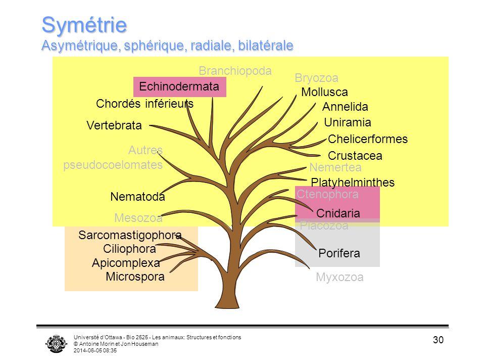 Symétrie Asymétrique, sphérique, radiale, bilatérale