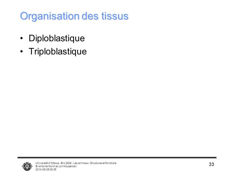 Organisation des tissus