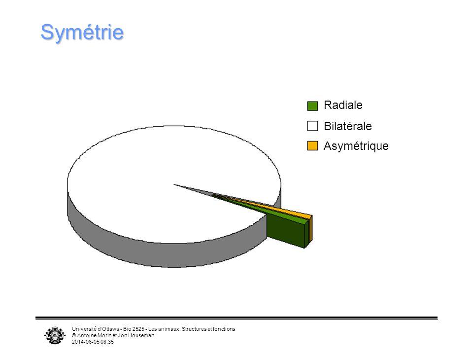 Symétrie Radiale Bilatérale Asymétrique