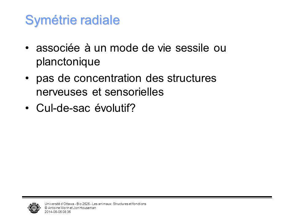Symétrie radiale associée à un mode de vie sessile ou planctonique