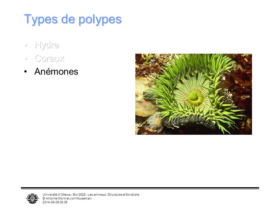 Types de polypes Hydre Coraux Anémones
