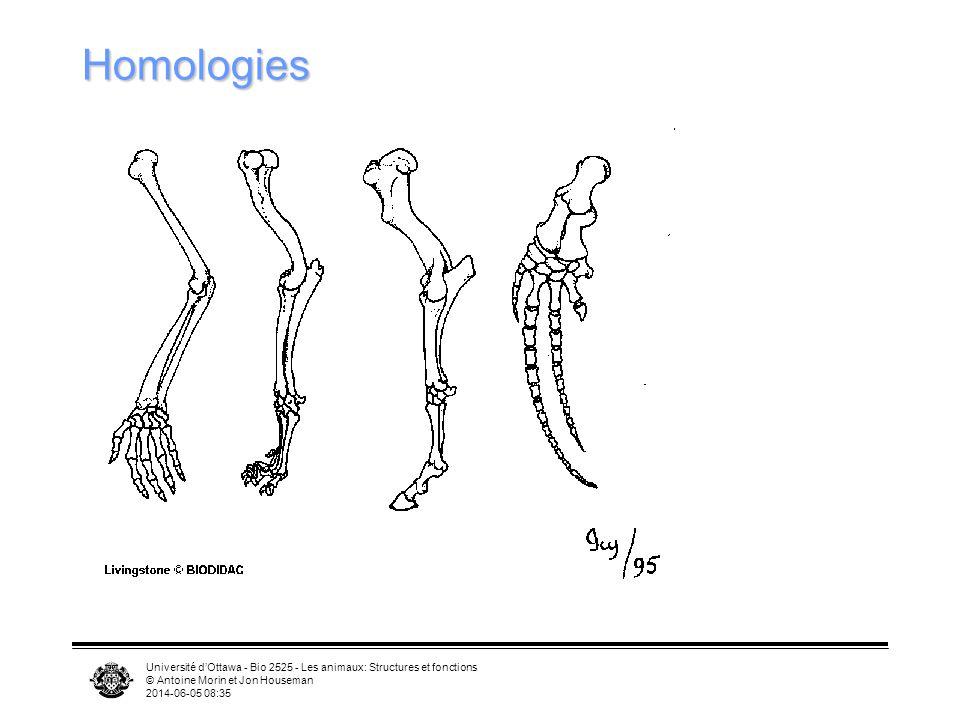 Homologies Université d'Ottawa - Bio 2525 - Les animaux: Structures et fonctions. © Antoine Morin et Jon Houseman.