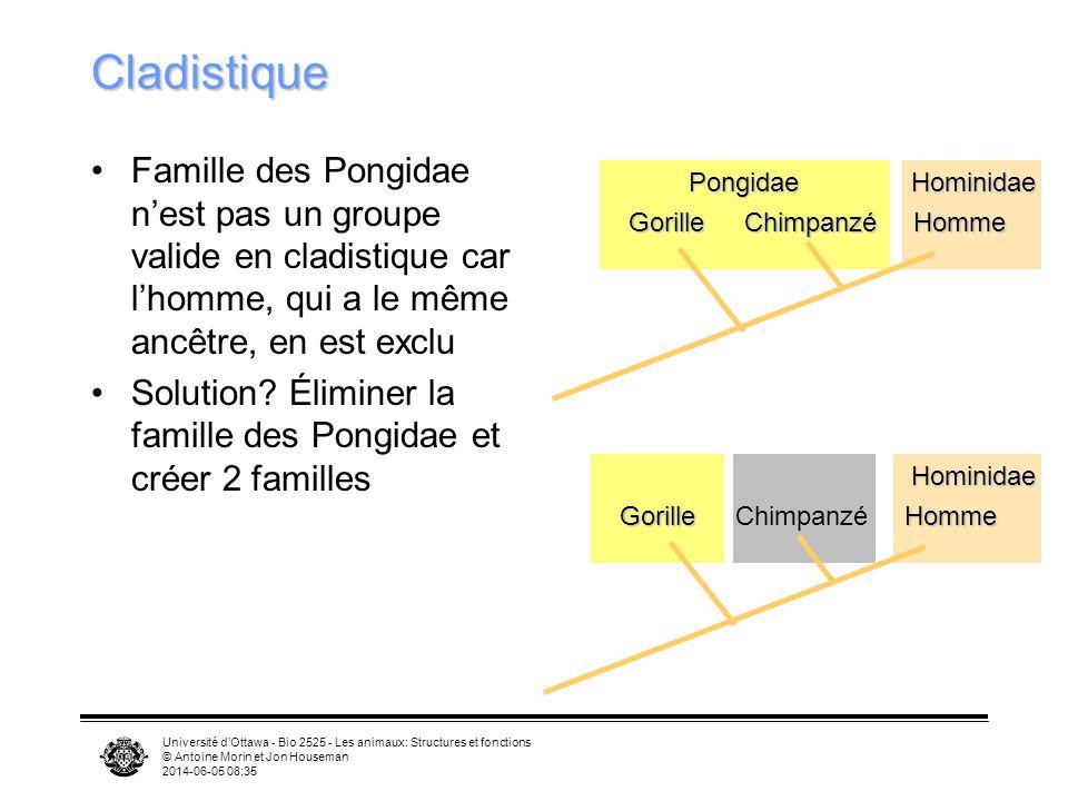 Cladistique Famille des Pongidae n'est pas un groupe valide en cladistique car l'homme, qui a le même ancêtre, en est exclu.