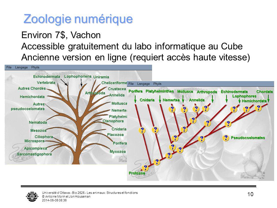 Zoologie numérique Environ 7$, Vachon