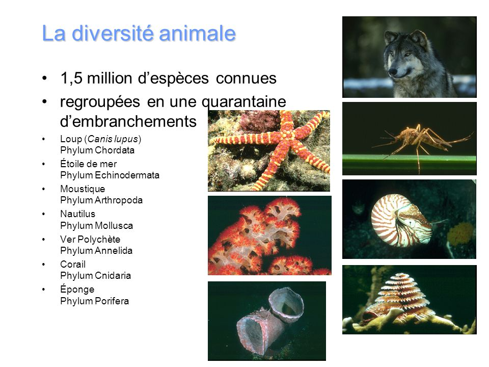 La diversité animale 1,5 million d'espèces connues
