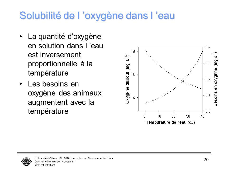 Solubilité de l 'oxygène dans l 'eau