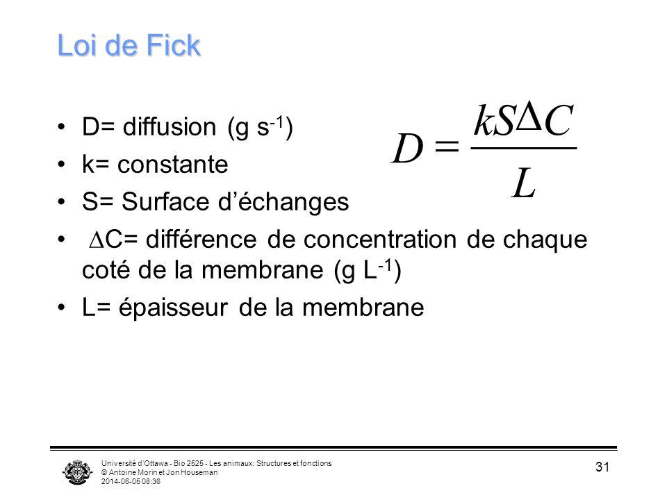 D kS C = D L Loi de Fick D= diffusion (g s-1) k= constante