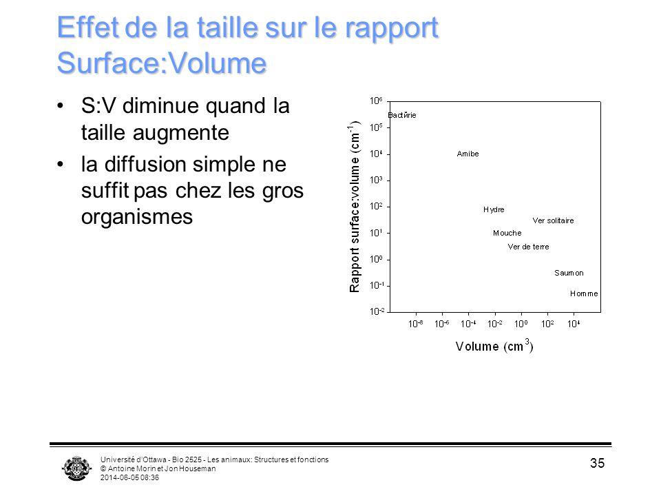 Effet de la taille sur le rapport Surface:Volume