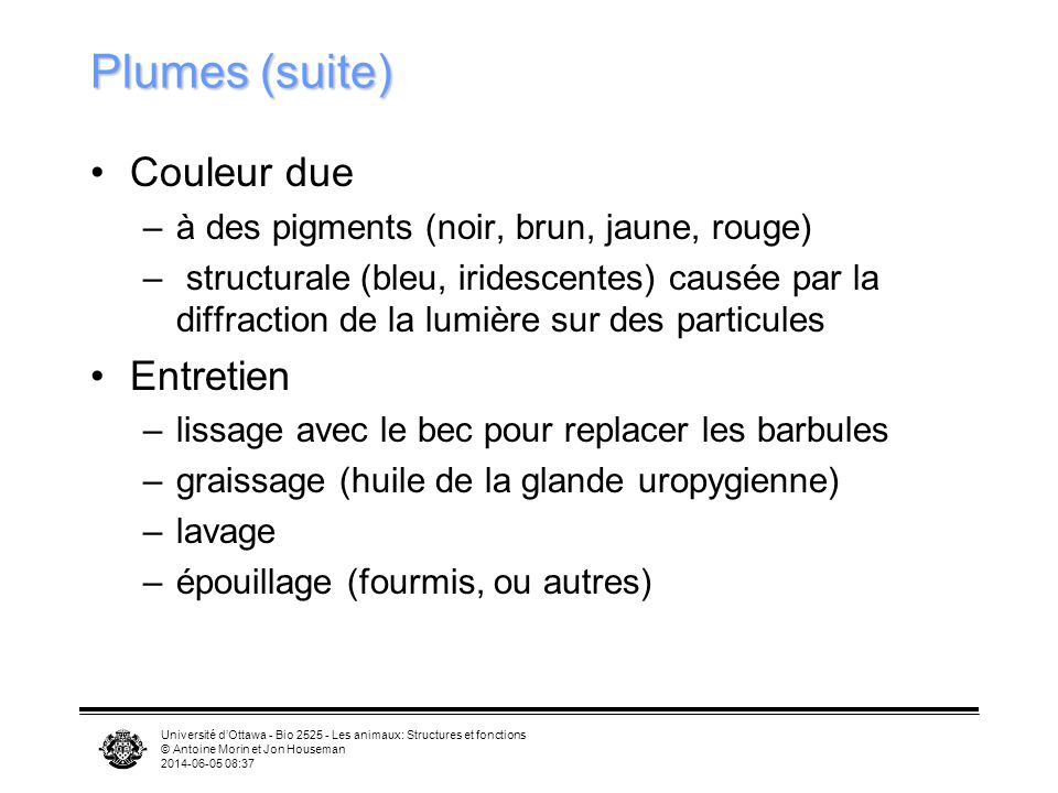 Plumes (suite) Couleur due Entretien
