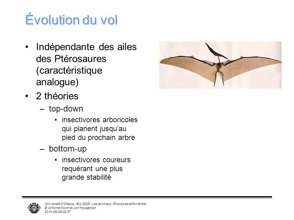 Évolution du vol Indépendante des ailes des Ptérosaures (caractéristique analogue) 2 théories. top-down.