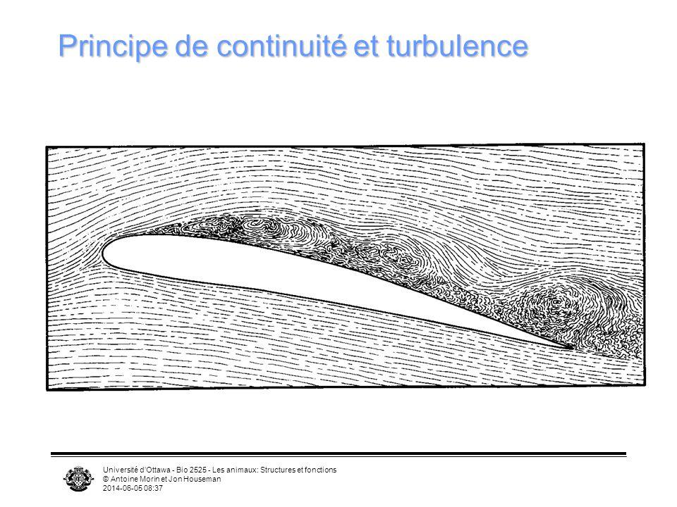 Principe de continuité et turbulence