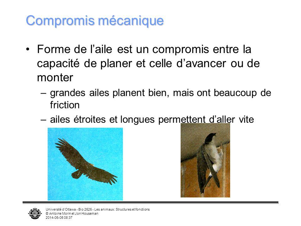 Compromis mécanique Forme de l'aile est un compromis entre la capacité de planer et celle d'avancer ou de monter.