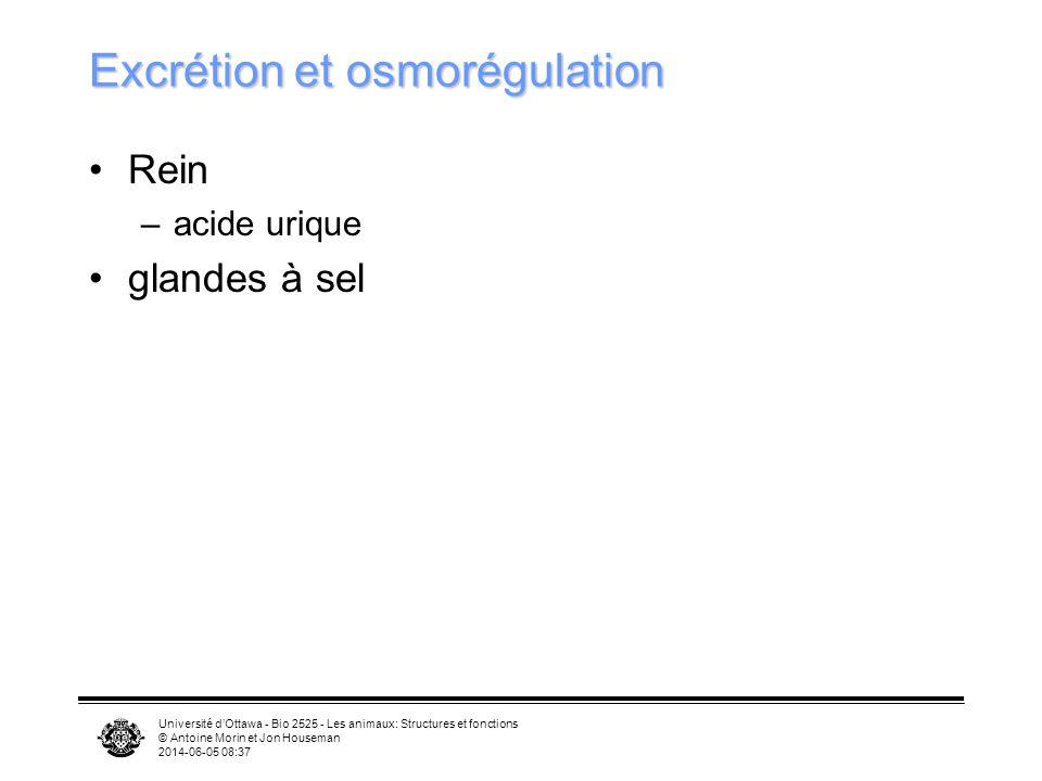 Excrétion et osmorégulation