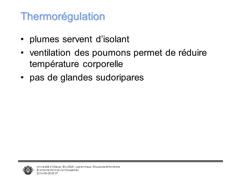 Thermorégulation plumes servent d'isolant