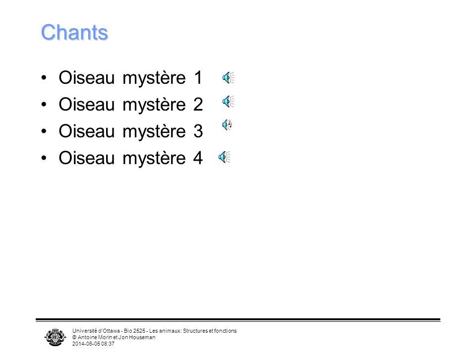 Chants Oiseau mystère 1 Oiseau mystère 2 Oiseau mystère 3