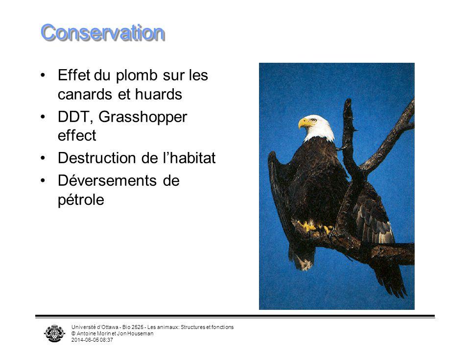 Conservation Effet du plomb sur les canards et huards