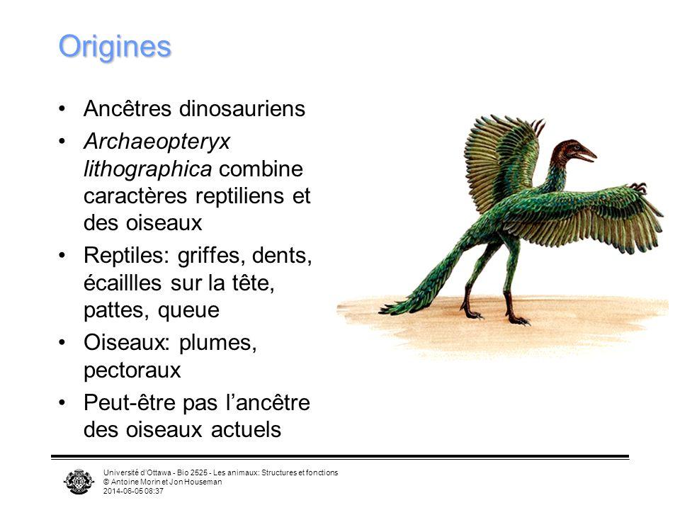 Origines Ancêtres dinosauriens