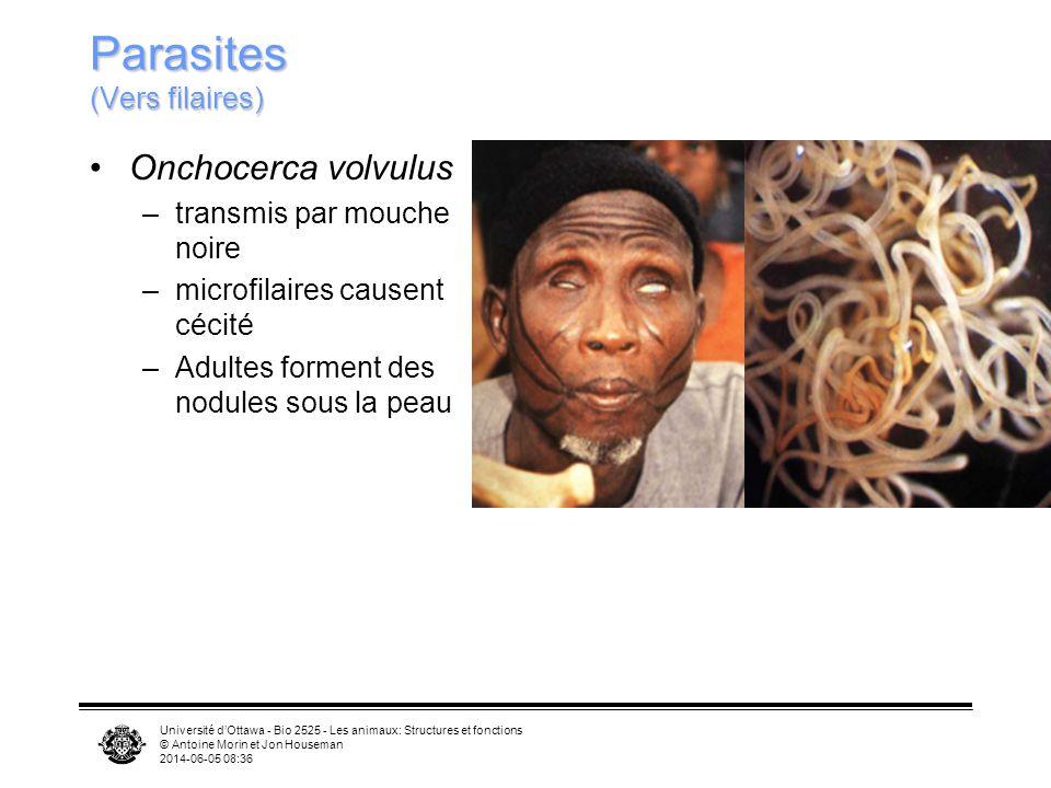 Parasites (Vers filaires)