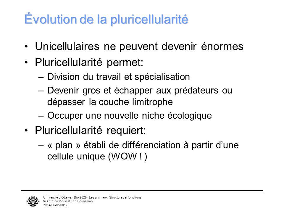 Évolution de la pluricellularité