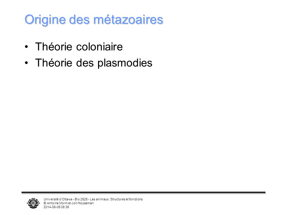 Origine des métazoaires