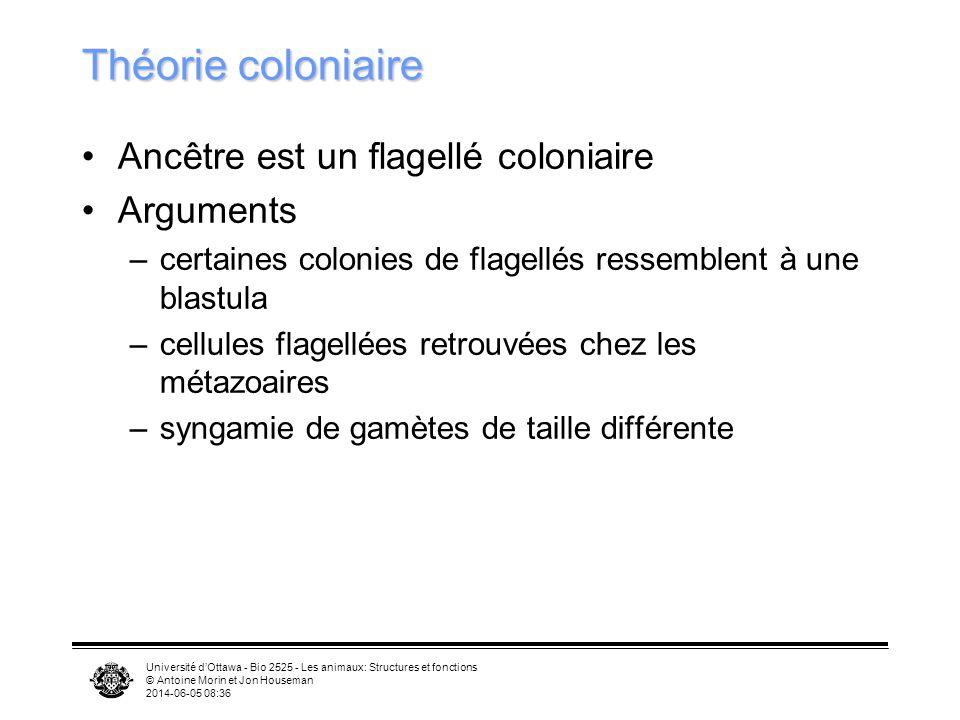 Théorie coloniaire Ancêtre est un flagellé coloniaire Arguments