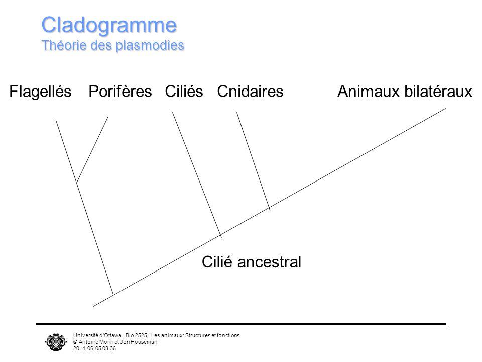 Cladogramme Théorie des plasmodies