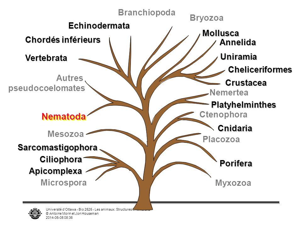Nematoda Branchiopoda Bryozoa Echinodermata Mollusca