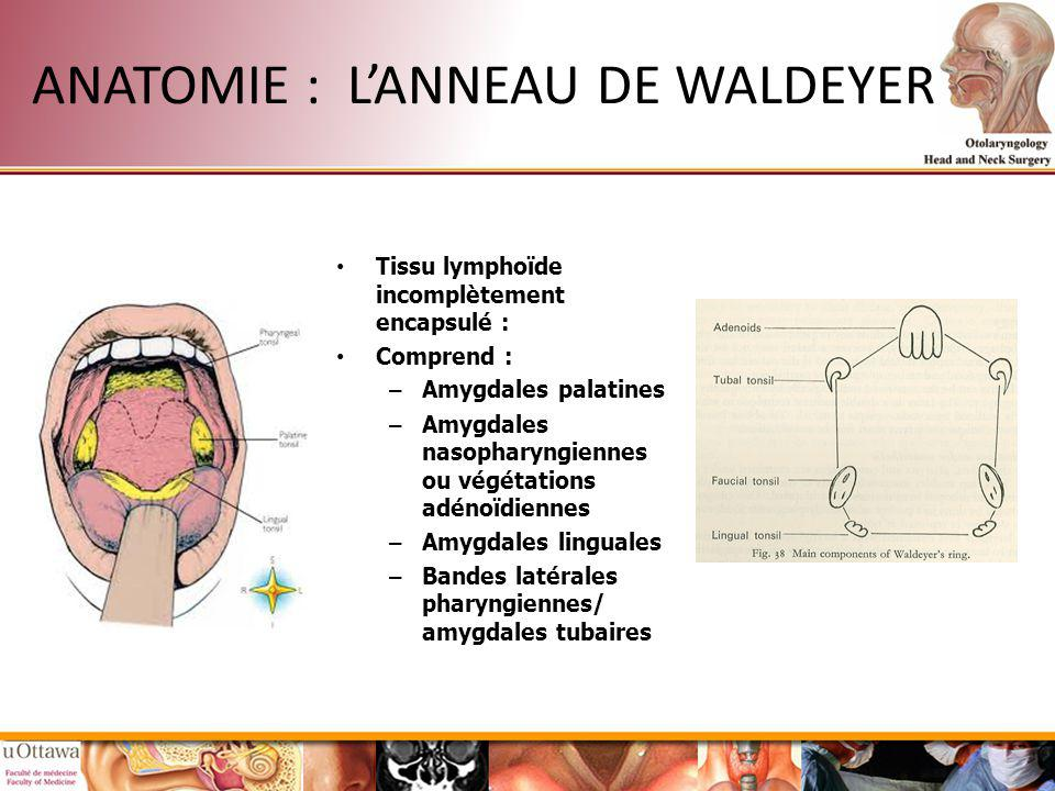 ANATOMIE : L'ANNEAU DE WALDEYER