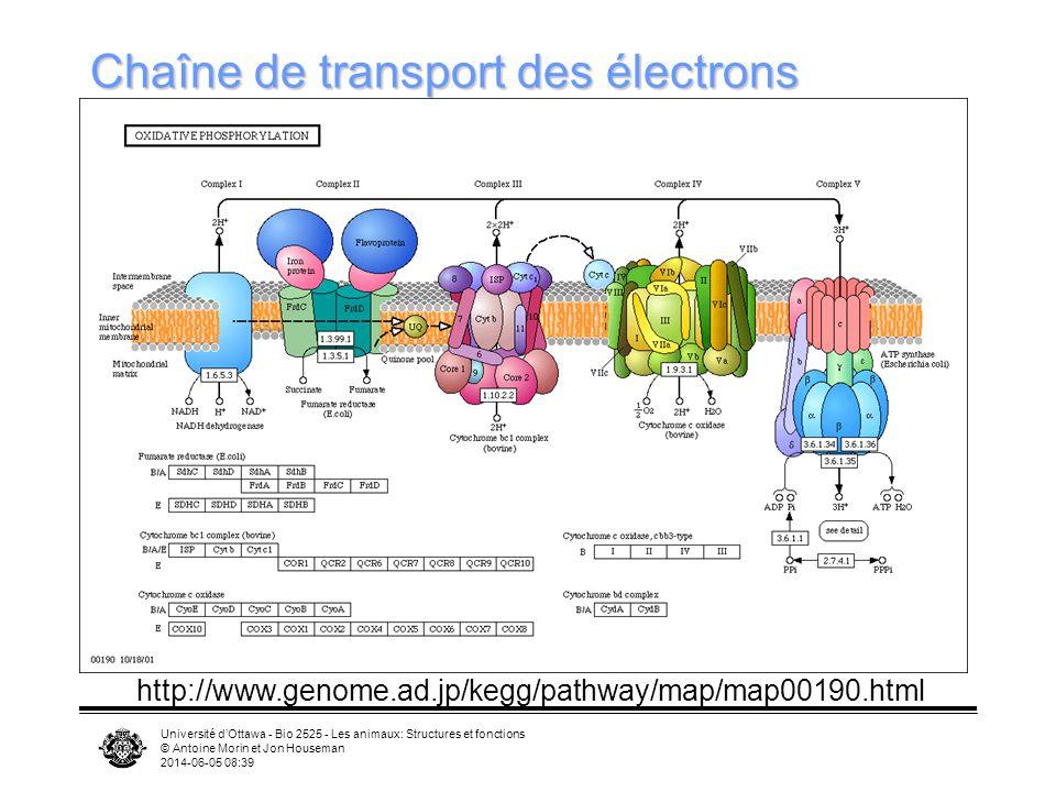 Chaîne de transport des électrons